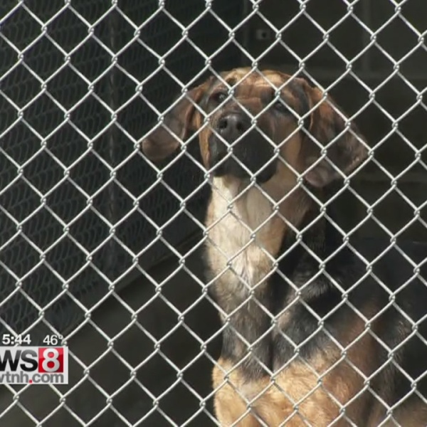 Hartford Animal Shelter overloaded with dogs