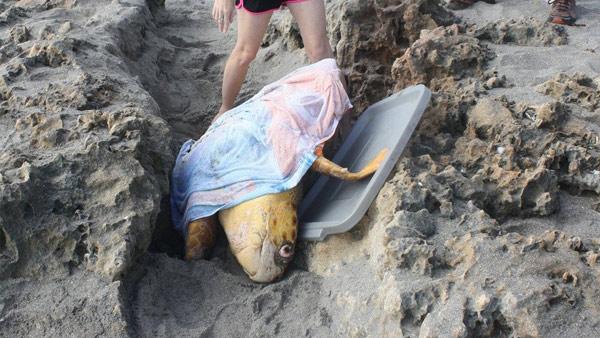 Turtle Rescue_301510