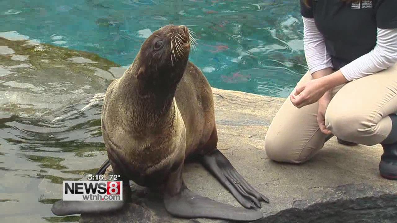 Mystic aquarium seal_126936