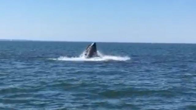 7.23 whale LIS_311730