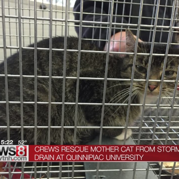 Mother found after four kittens rescued yesterday