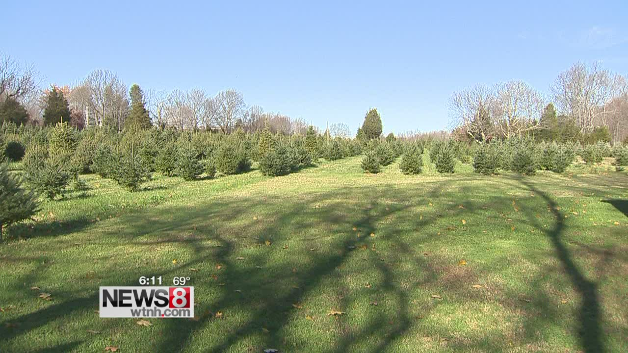 Christmas tree growers: Drought not seriously hurting crop
