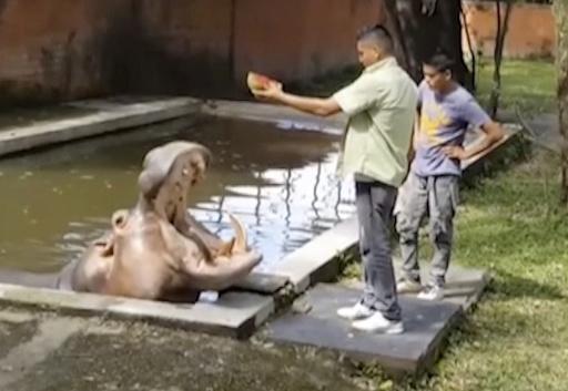 El Salvador Hippo Slain_407386