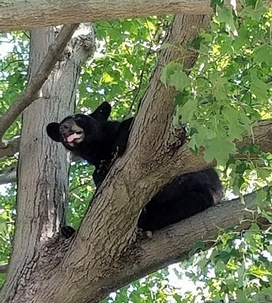 Bear3_HeidiWinchel_471041
