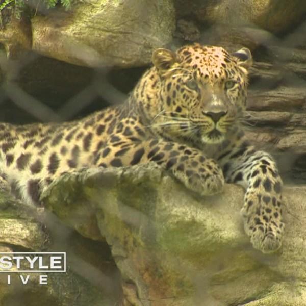 zookeeper experience at beardsley zoo ct_488876