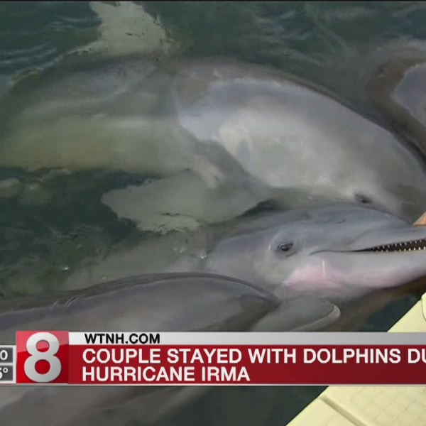 Florida couple braves Hurricane Irma to care for dolphins: 'I wasn't going to leave them'