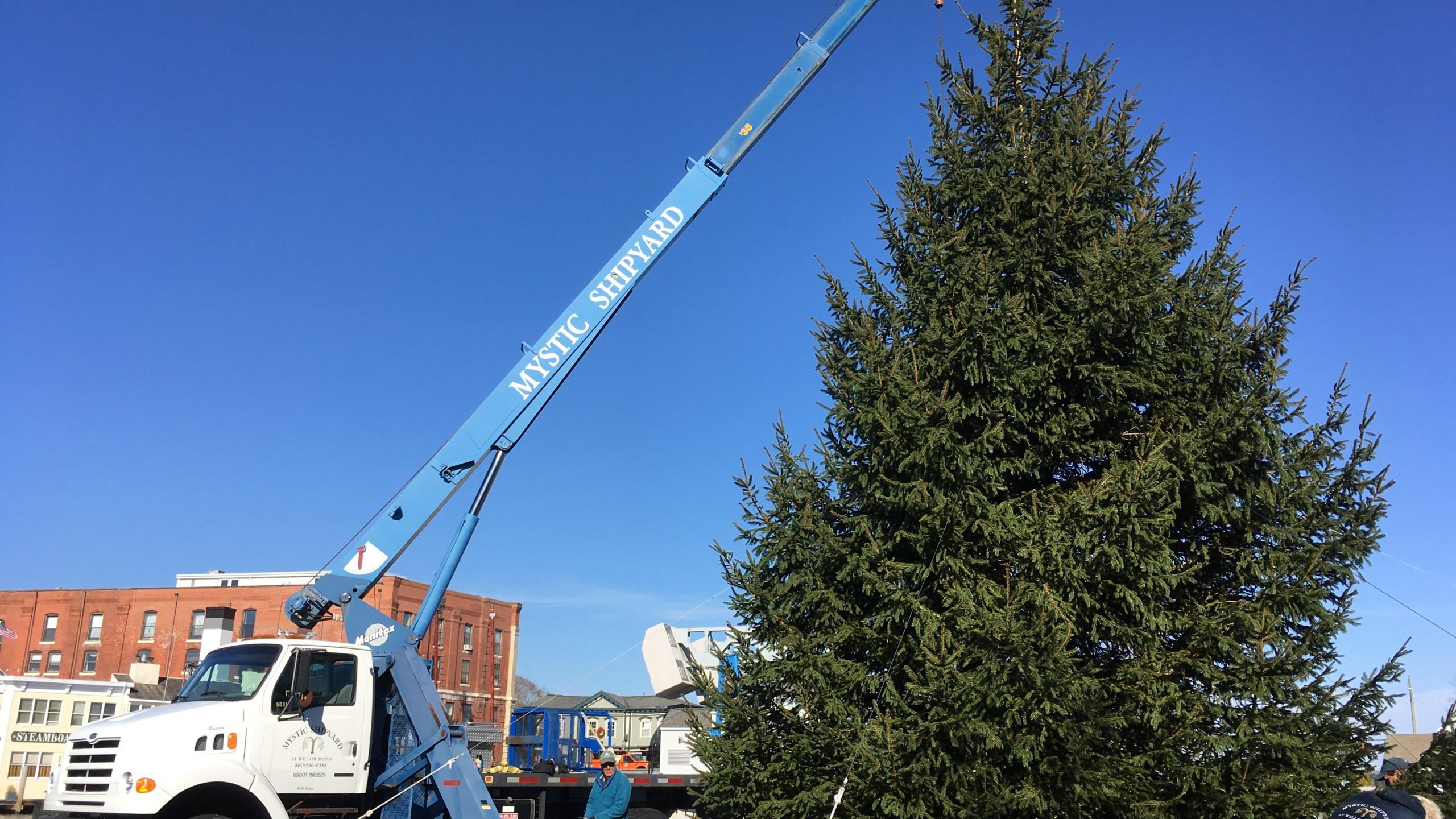 mystic christmas tree 4_568510