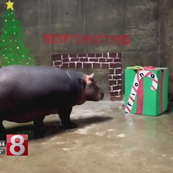12_25_17 fiona hippo christmas_588665
