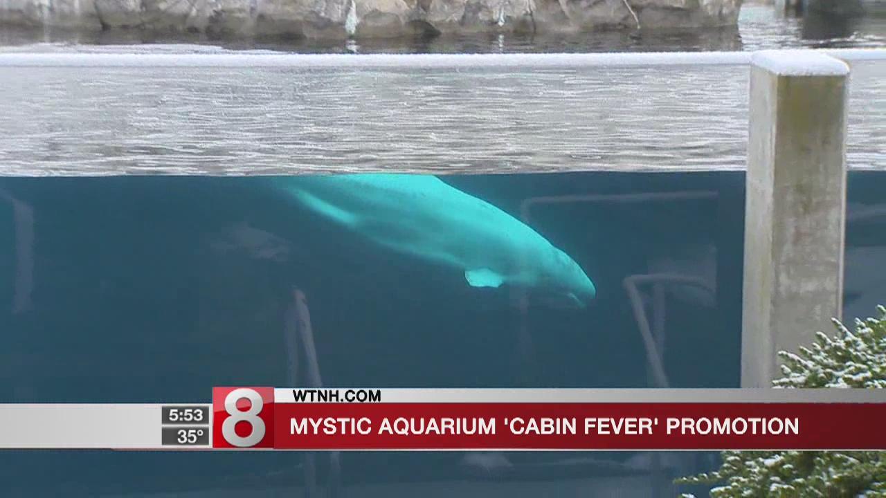 Mystic Aquarium offers ticket discount