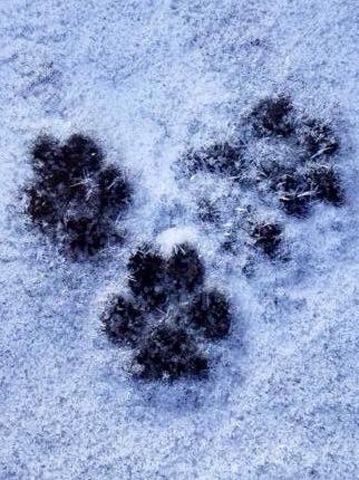 cold paws_596046