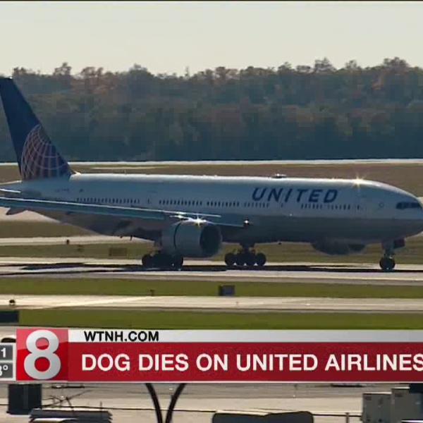 Dog dies after airline worker has it placed in overhead bin