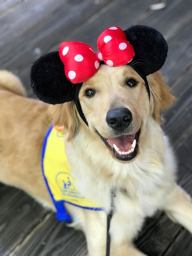 These service dogs visiting Disneyland will make your day