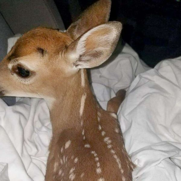 rescued-deer-ht-2-thg-180423_hpMain_4x3_992_1524654839326.jpg