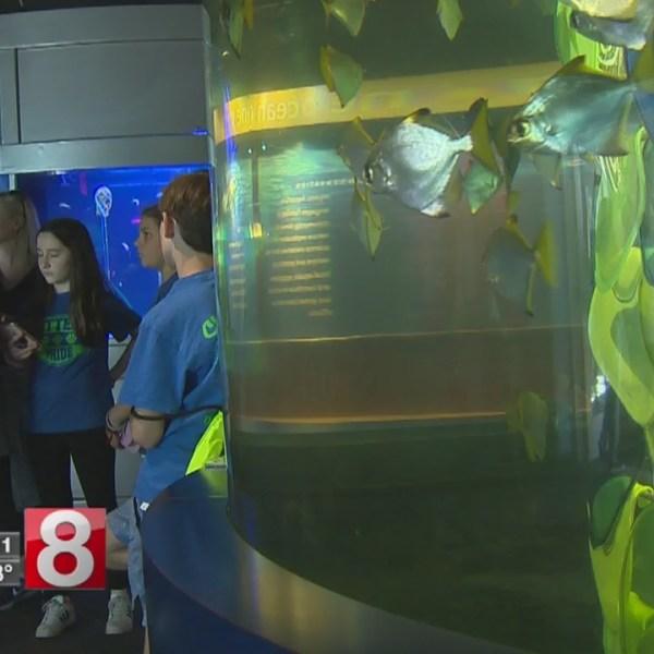 Family fun at Mystic Aquarium's 'Summer Nights'