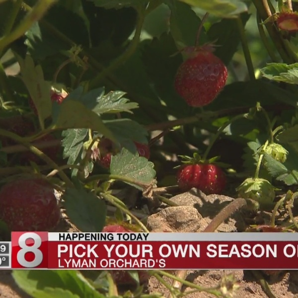 'Pick Your Own' season opens at Lyman Orchards