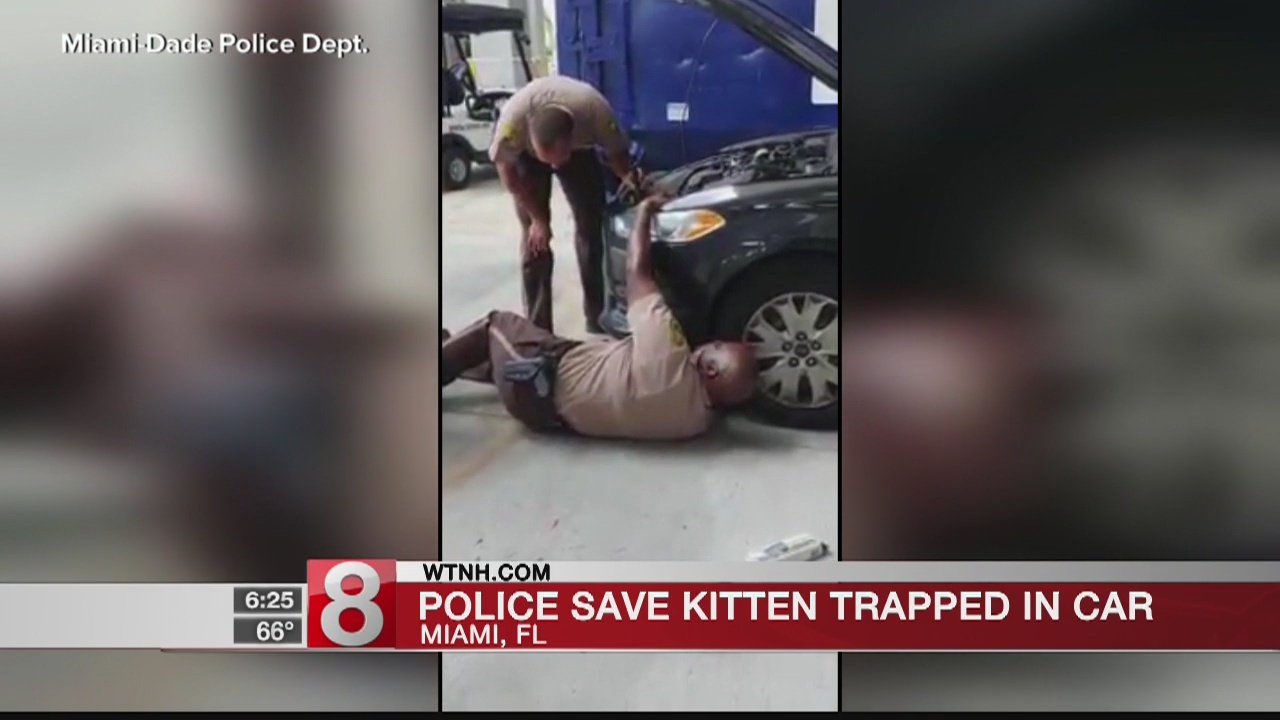 Miami police save kitten trapped in car