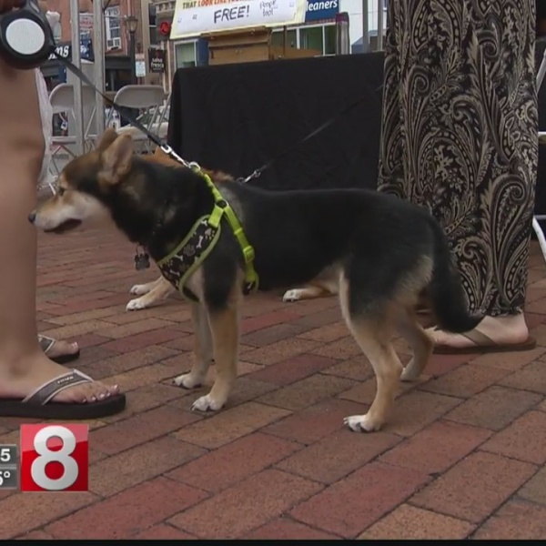 Animal adoption event held in New Haven on Sunday