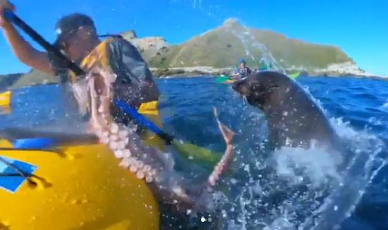 2018-09-27-Seal-Slaps-man-with-Octopus_1538044324577.jpg
