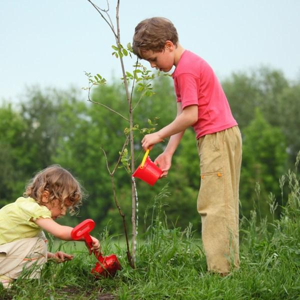 Kids plant tree sapling generic