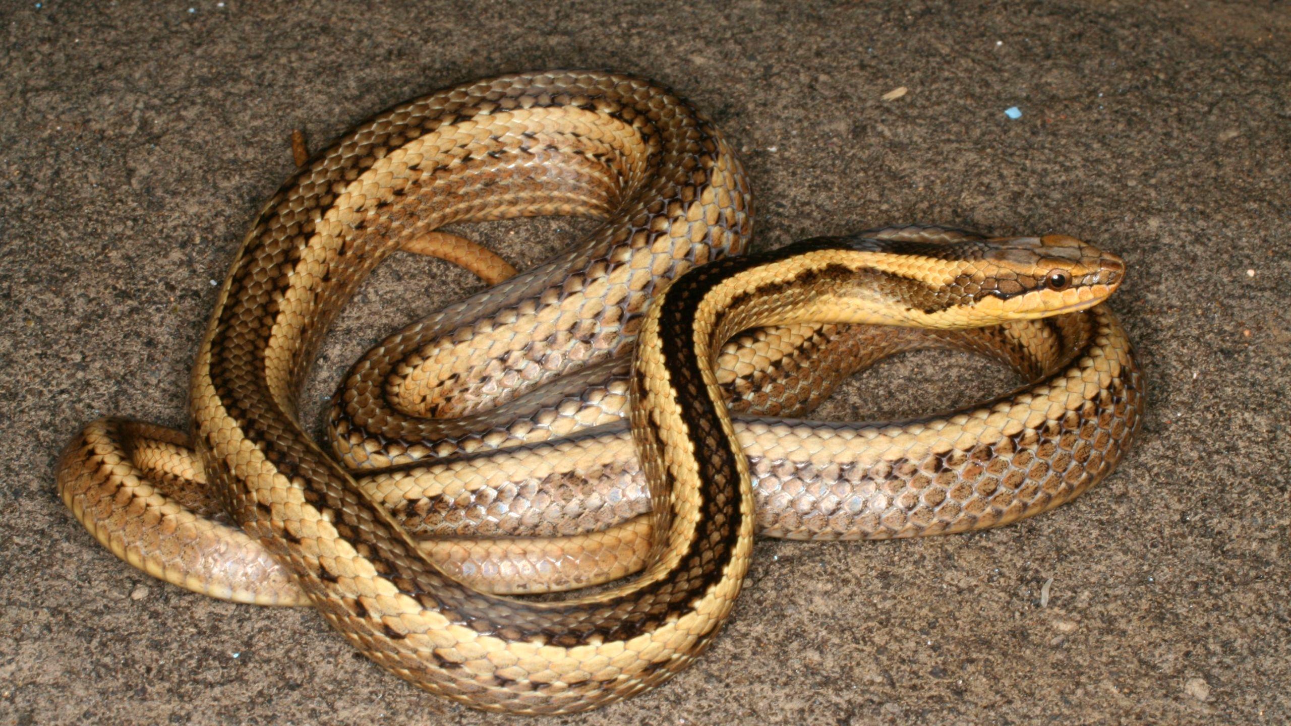 Snake names honor Darwin, fire god, Louisiana professor