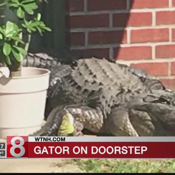 Alligator spotted on Louisiana doorstep