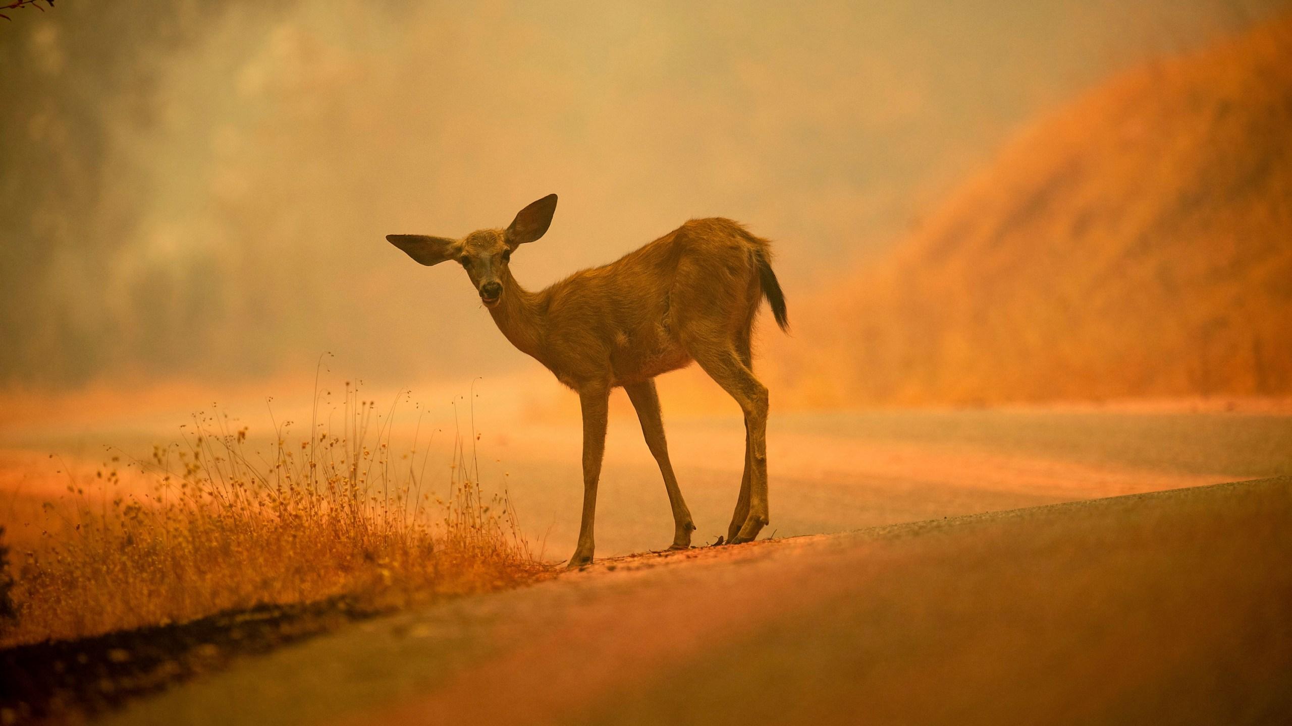 California Wildfire Pet Reunions_1541271974742