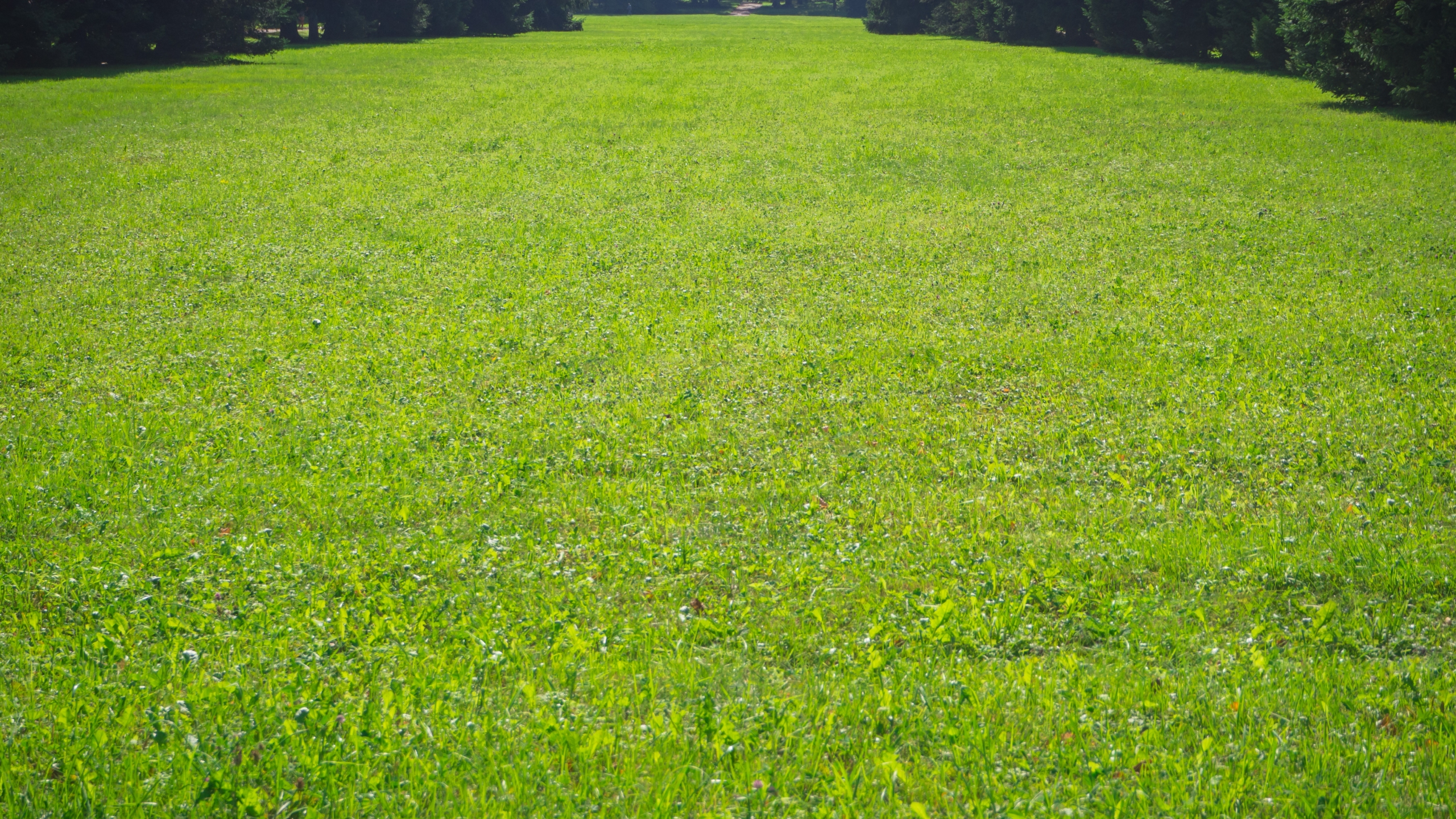 Green Lawn. Scenic View Of A Beautiful English Style Garden With_1541563198398