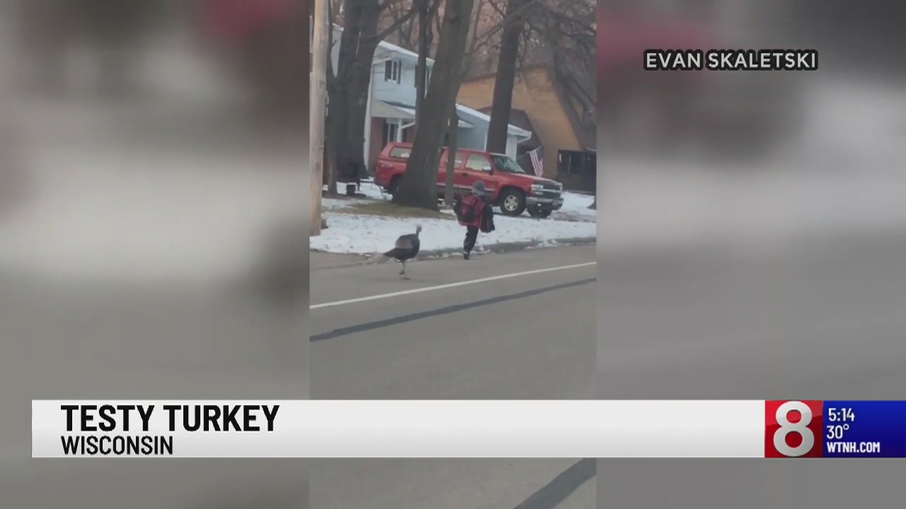 Video shows a Wisconsin boy being chased by a testy turkey