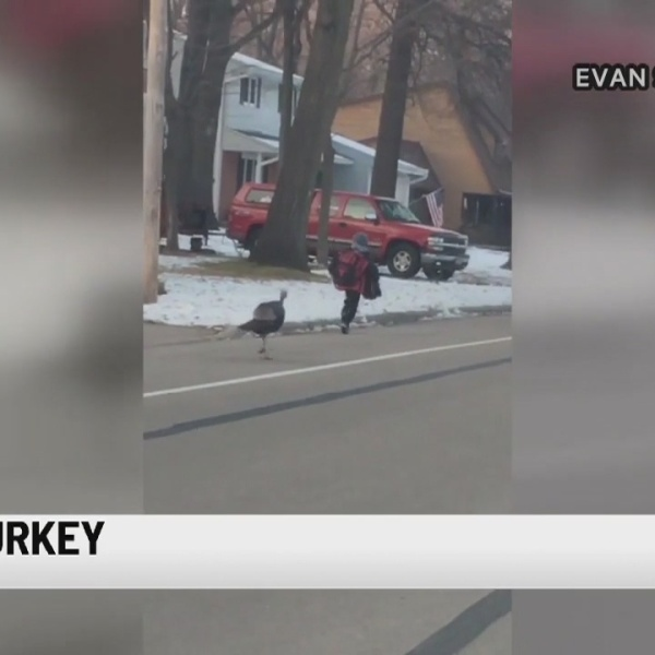 Testy Turkey