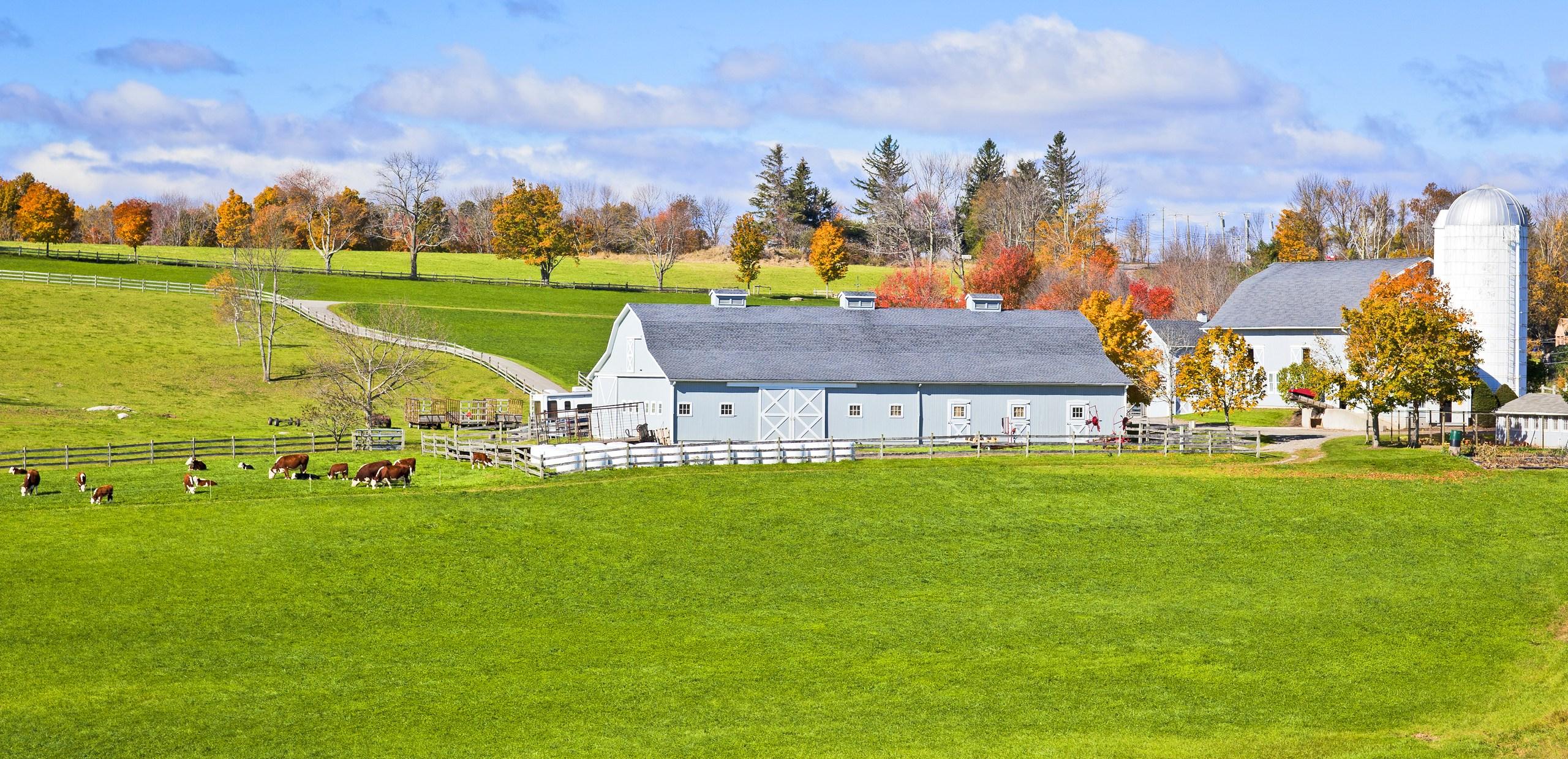Farm Generic Farming Dairy Cows Barn