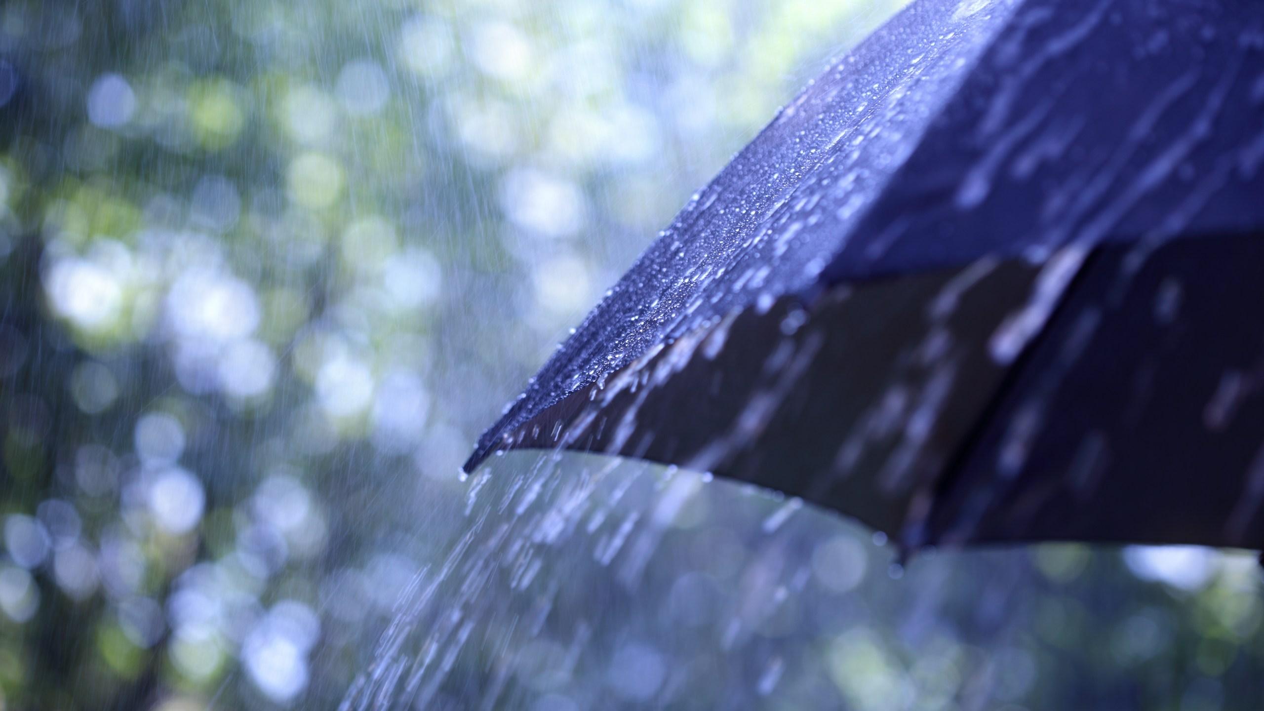 Rain Storm_446396