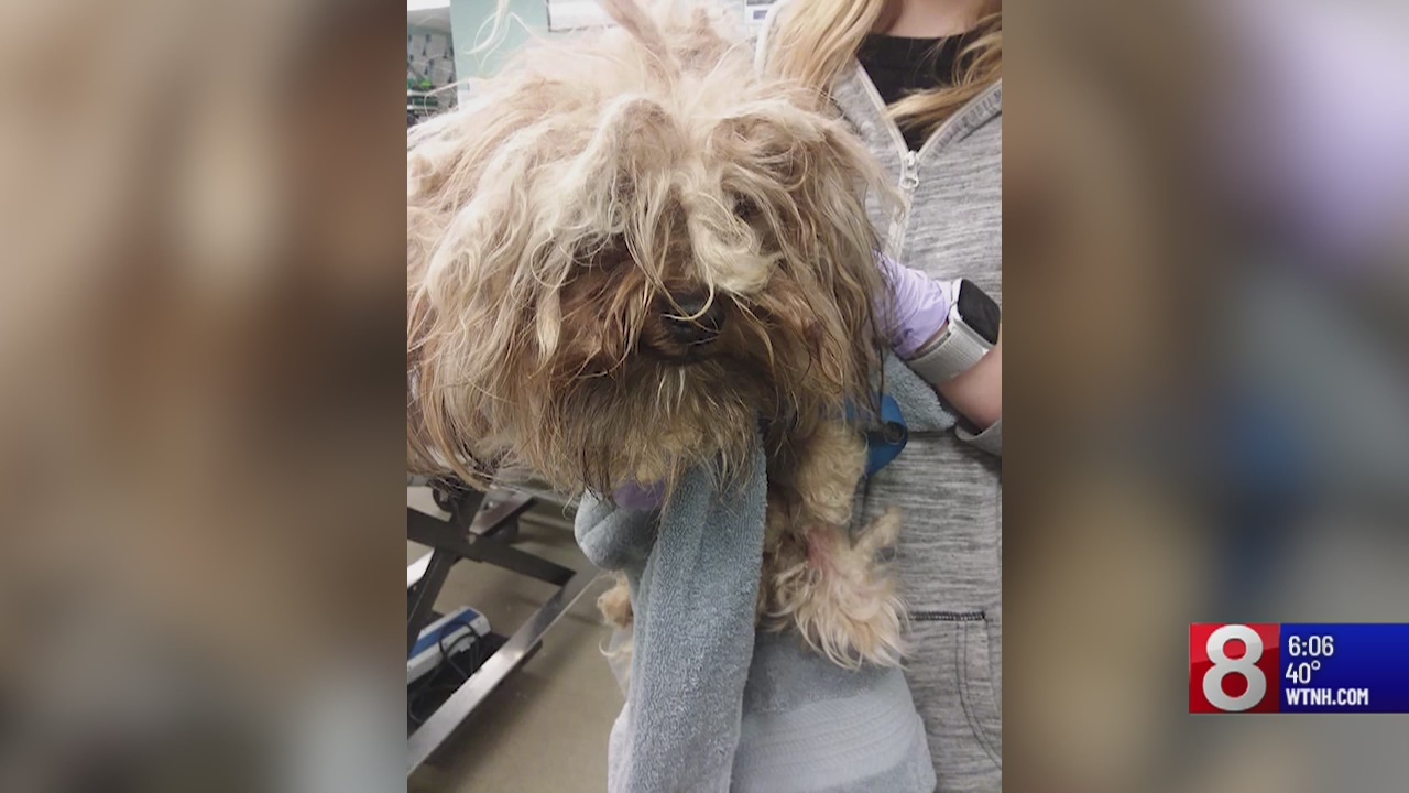 Police look for owner of dogs with matted fur in Manchester
