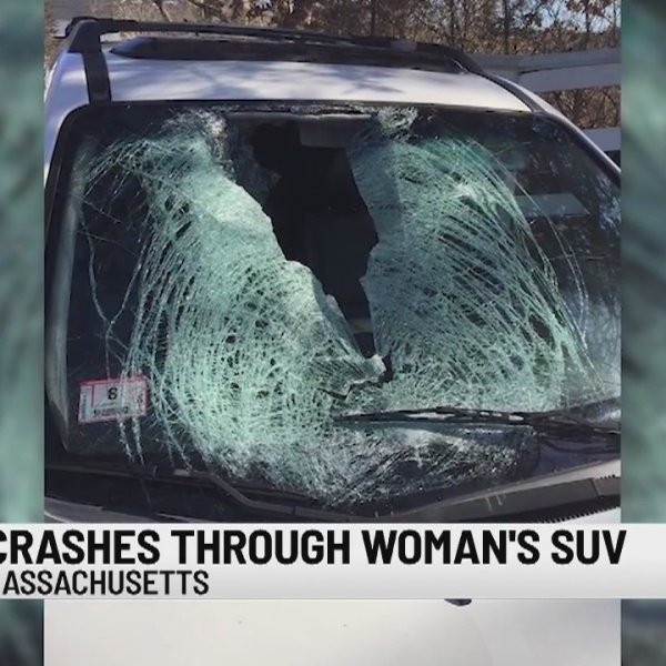 Unusual: Turkey hit by car and crashes through windshield
