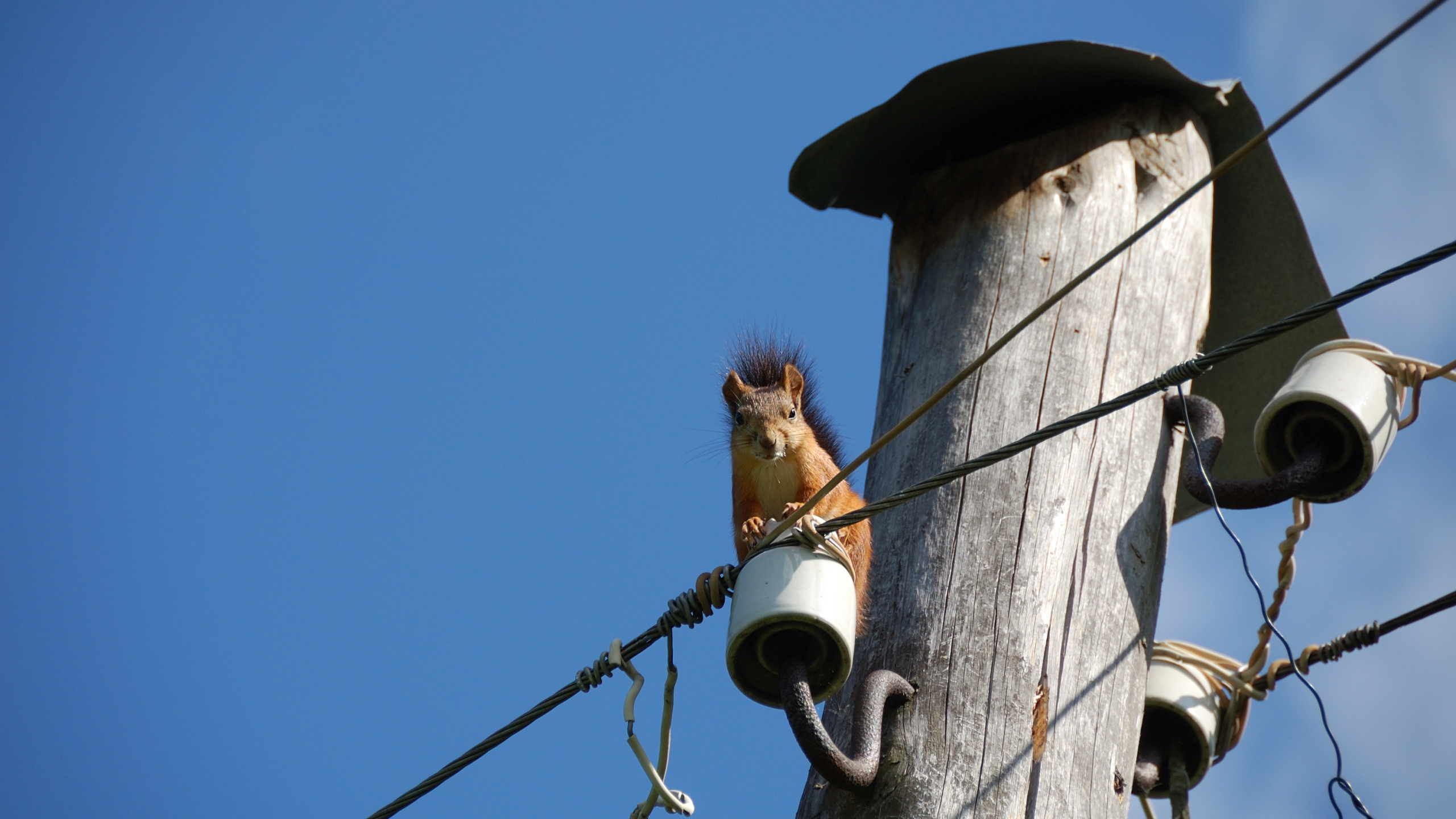 squirrel sitting on dielectric of old electric pole_1553884556532