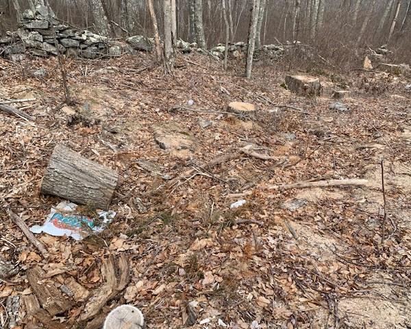 dead trees gypsy moth caterpillars 1_1553544559794.jpg.jpg