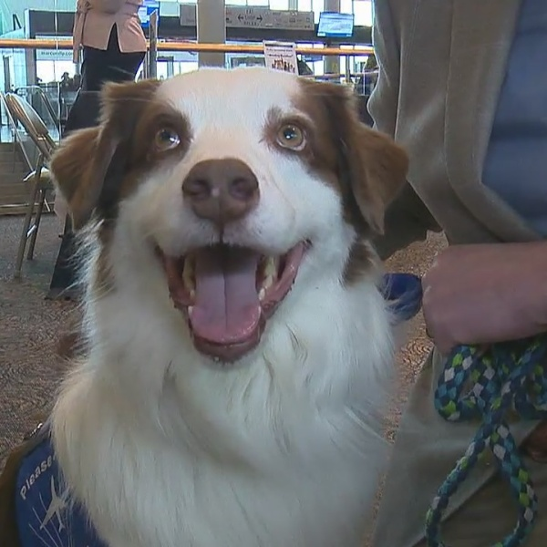 Bradley Airport recognizes therapy dog program for National Therapy Animal Day