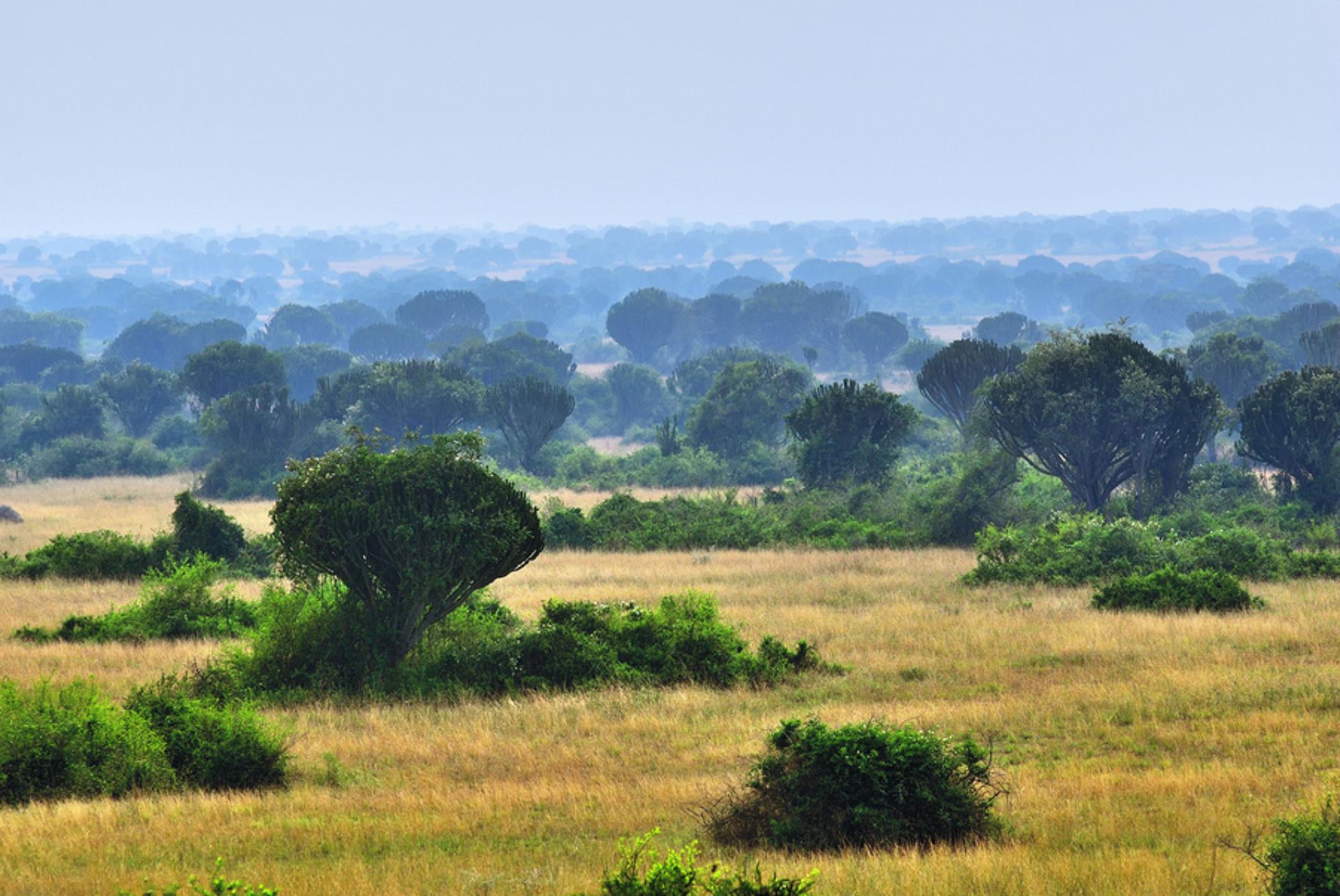 Queen Elizabeth Park Uganda_1554381469463.jpg.jpg