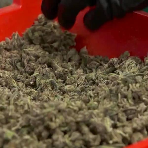 Doctors_predict_marijuana_will_be_the__n_8_20190501032232