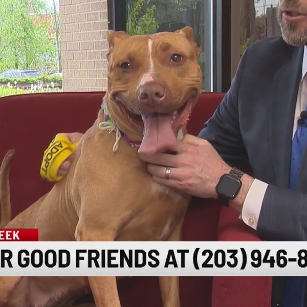 Pet of the Week: Lucy