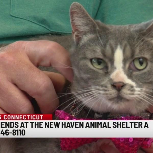 Pet of the Week: Phoebe