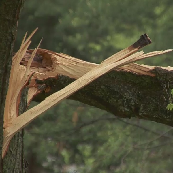 Stretch Your Dollar: Considerable cautions for on-property trees during summer storms