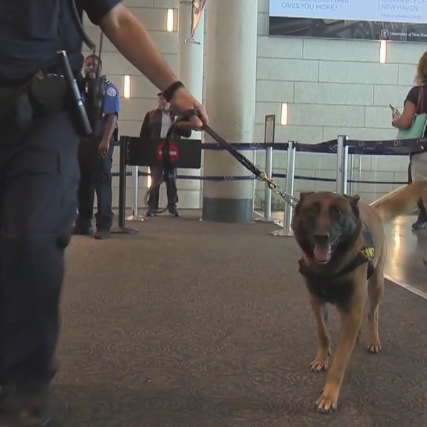Behind the scene look at bomb sniffing dogs at Bradley Airport