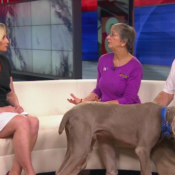 Emergency preparedness for pets