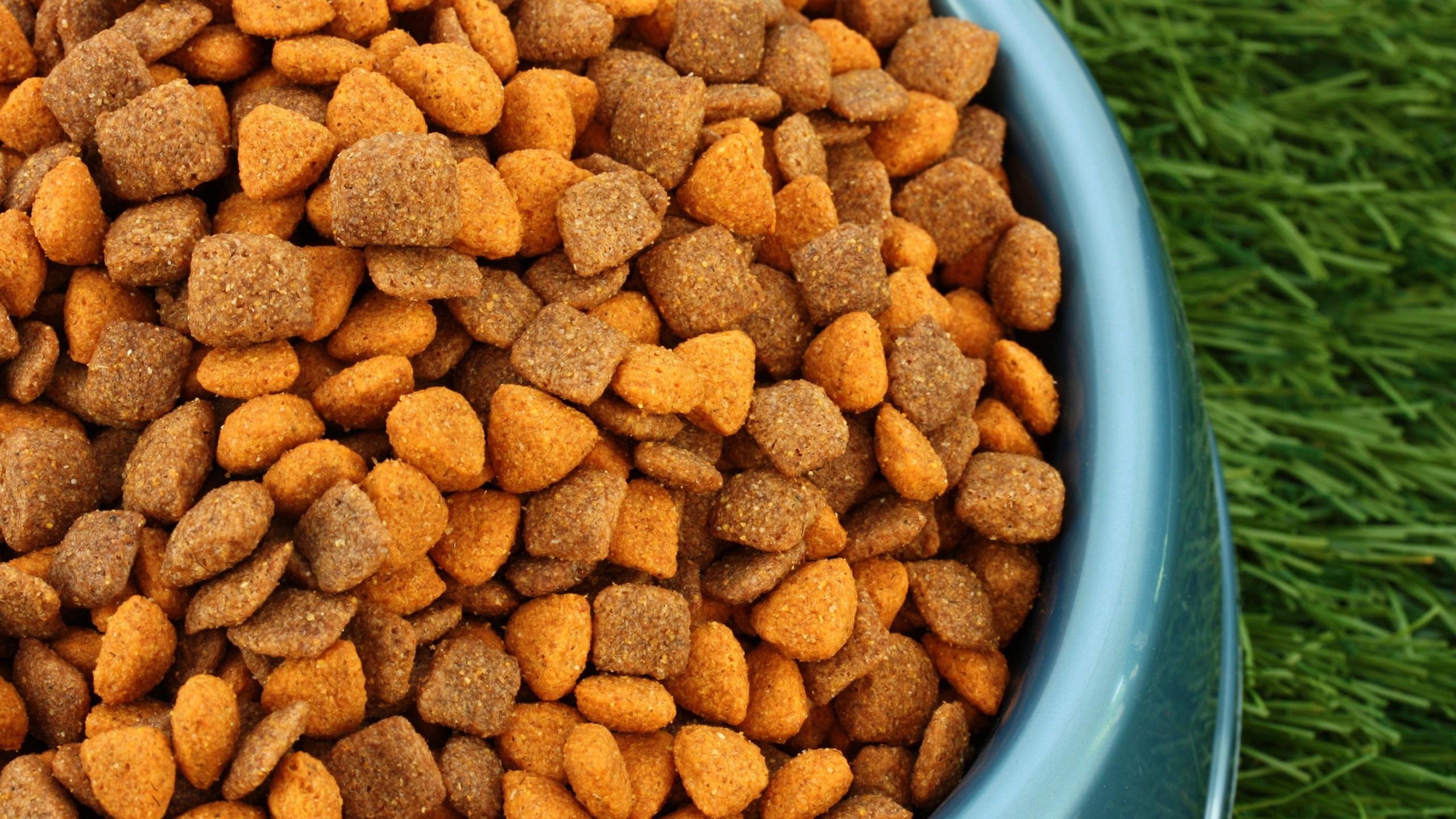 Dog Food | WTNH com