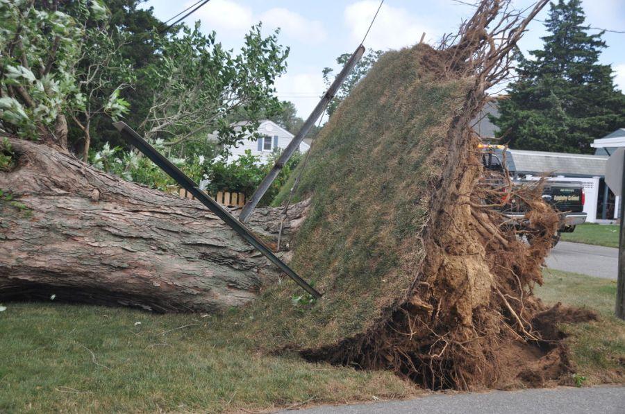 Tree down in Old Saybrook